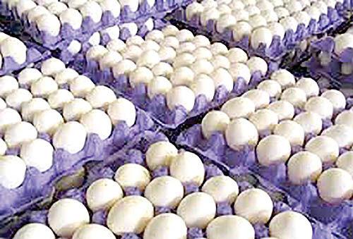 ماجرای گرانی تخممرغ در فصل زمستان