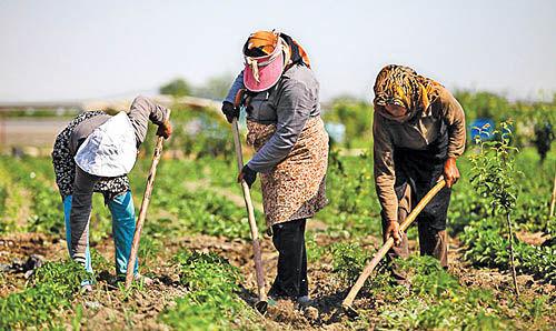 پرداخت تسهیلات اشتغالزا به روستاییان