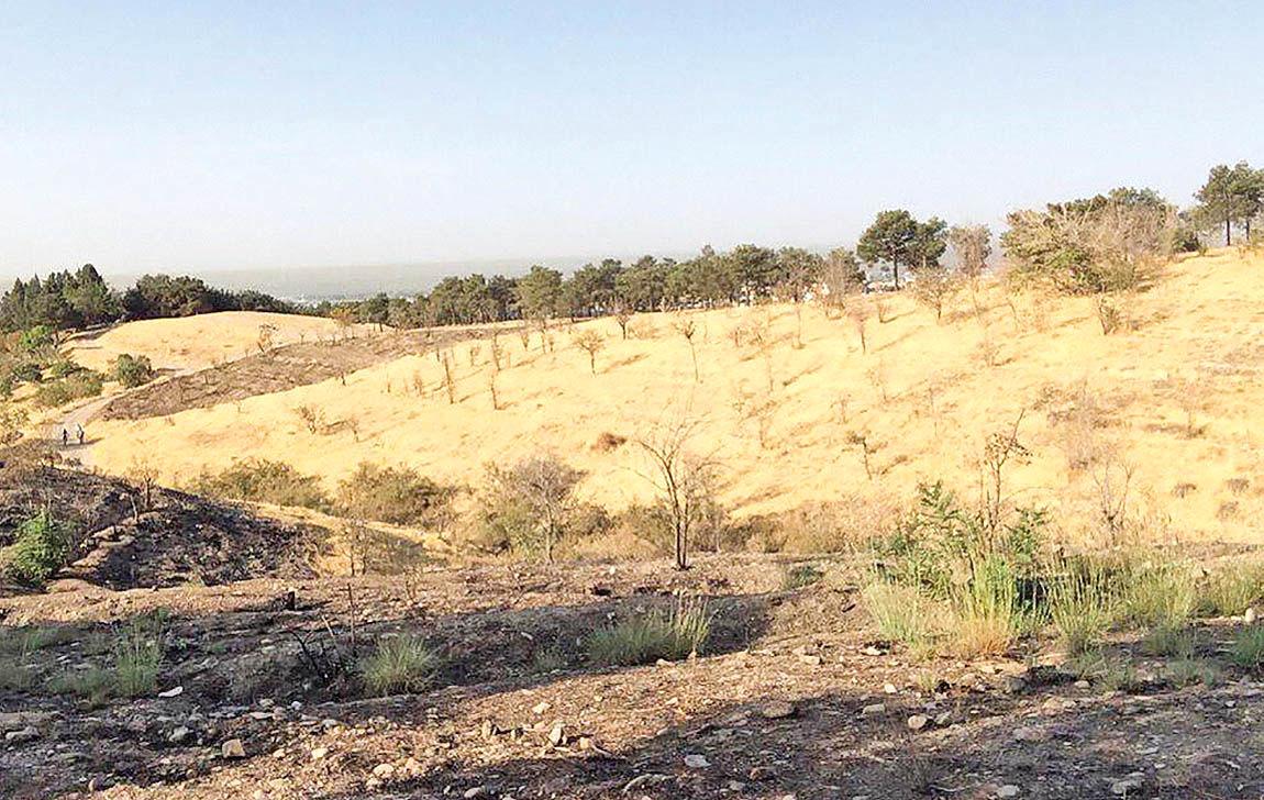 معمای نابودی پارک چیتگر