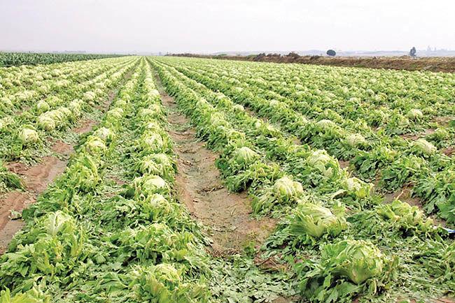تولید 16 میلیون تن محصول کشاورزی
