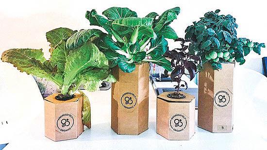 باغچههای خانگی و نظام غذایی منعطفتر