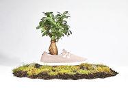 چرا این شرکت از درخت کفش تولید میکند؟