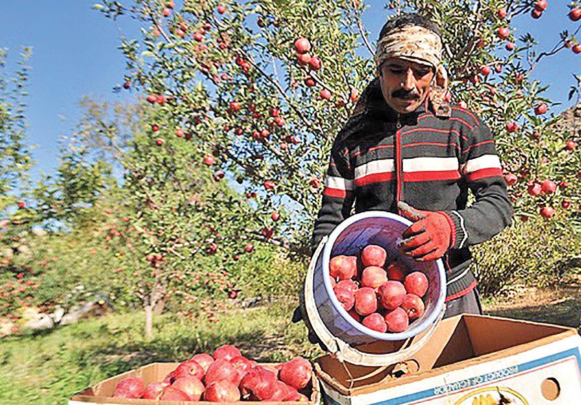 گلایه کشاورزان از سیب ارزان