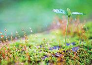 جوانههای سبز شاید واقعا نویددهنده بهار نباشند