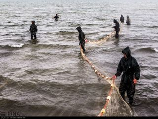 آخرین روزهای صید ماهی در دریای خزر