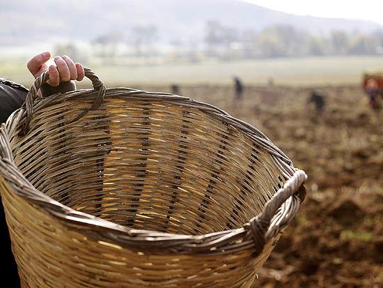 کارآفرینی در آفریقا ؛ استارتآپی برای دیجیتالسازی کشاورزی