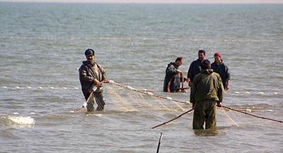 صید ماهیان استخوانی در گیلان 58 درصد افزایش یافت