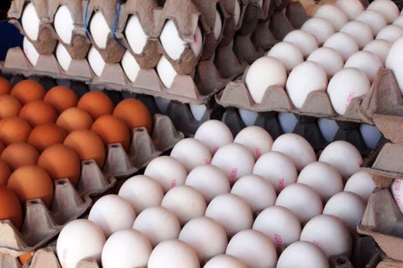 قیمت تخم مرغ امروز ۱۳۹۸/۰۳/۱۴