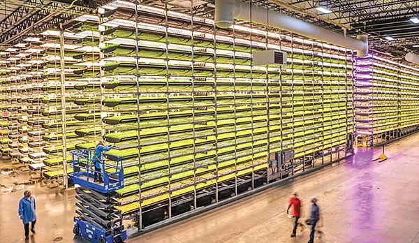 کشاورزی در فضای بسته و مزیتهای امیدوارکننده برای محیطزیست