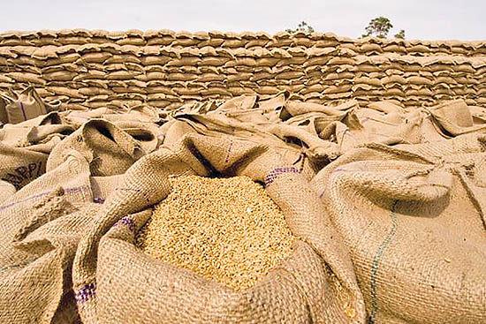 پیشبینی برداشت ۷۰۰ هزار تن گندم در استان همدان