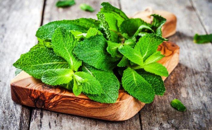 گیاهان دارویی که مسکن طبیعی معده درد هستند +درمان طب سنتی سوزش سر دل
