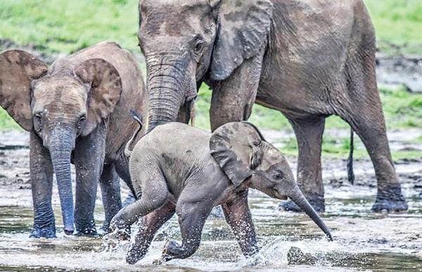 هوش مصنوعی به کمک فیلها میآید