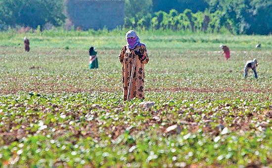 طرح اشتغال روستایی در آذربایجانشرقی