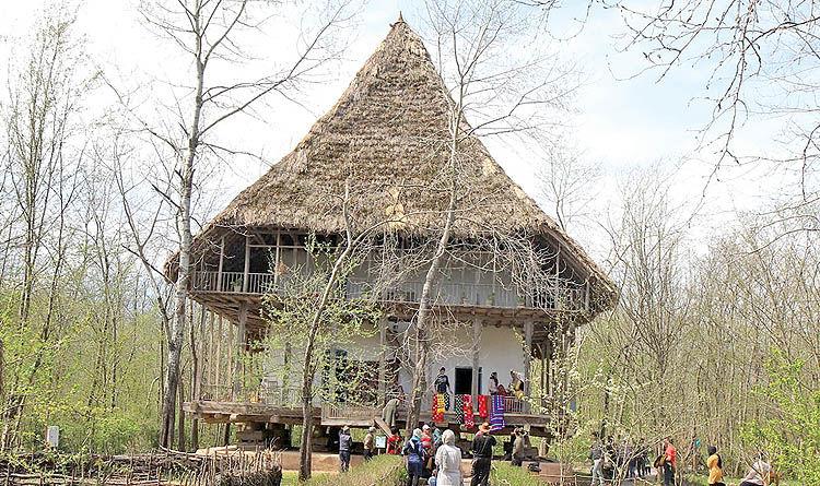 موزهگردی در جنگل