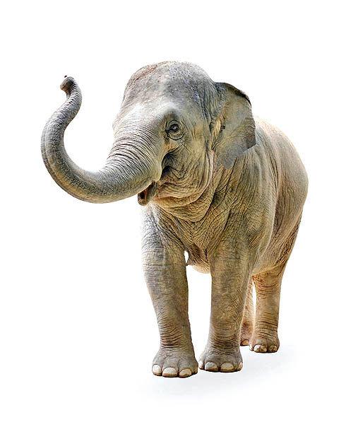 فیلهایی که باید از اتاق هیاتمدیره بیرون بروند